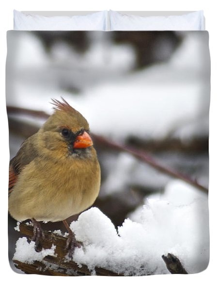 Cardinal Female 3679 Duvet Cover by Michael Peychich