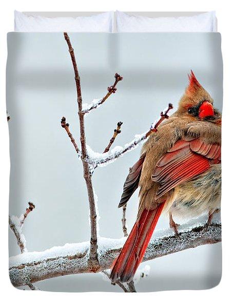 Cardinal I The Snow  Duvet Cover