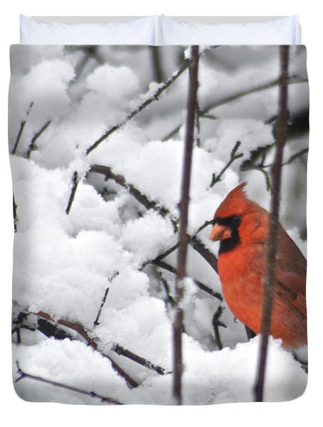 Cardinal Male 3669 Duvet Cover by Michael Peychich