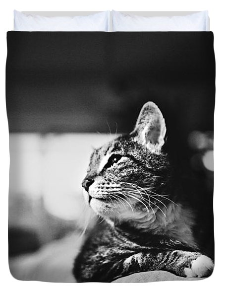 Cats Portrait Duvet Cover by Sumit Mehndiratta