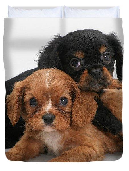 Cavalier King Charles Spaniel Puppies Duvet Cover by Jane Burton