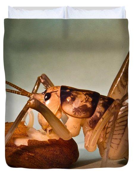Cave Cricket Feeding On Almond 10 Duvet Cover by Douglas Barnett