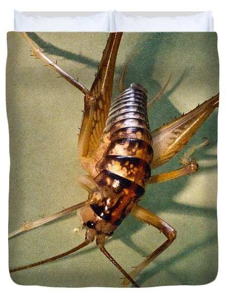 Cave Cricket In Shadow 1 Duvet Cover by Douglas Barnett