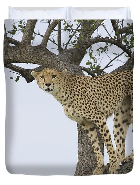 Cheetah Acinonyx Jubatus Female Duvet Cover by Suzi Eszterhas