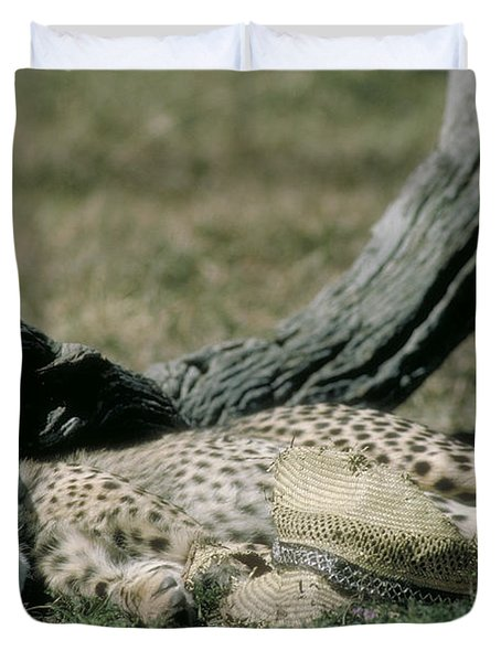 Cheetah Cub Sleeping And Guarding Hat Duvet Cover by Greg Dimijian