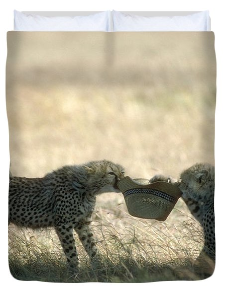 Cheetah Cubs Play With Hat Duvet Cover by Greg Dimijian