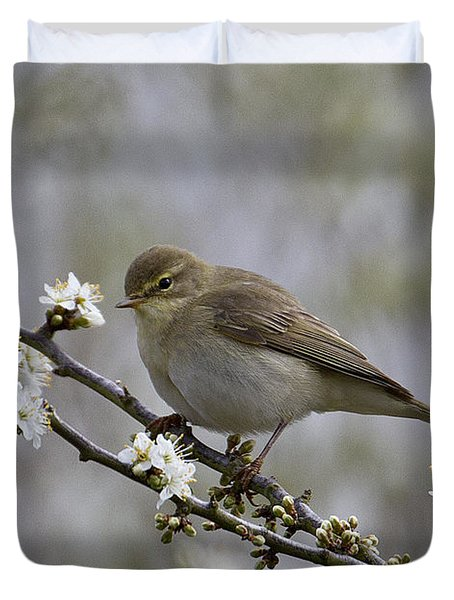 Chiff Chaff On Blackthorn Blossom Duvet Cover