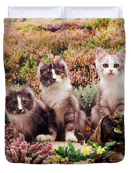 Chinchilla-cross Kittens Duvet Cover by Jane Burton