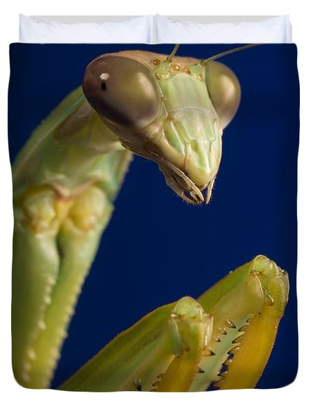 Closeup Of Praying Mantis Duvet Cover by Corey Hochachka