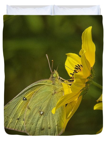 Clouded Sulphur Butterfly Din099 Duvet Cover by Gerry Gantt