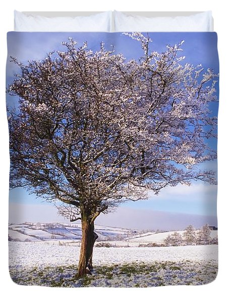 Co Antrim, Ireland Hawthorn Tree Known Duvet Cover by The Irish Image Collection