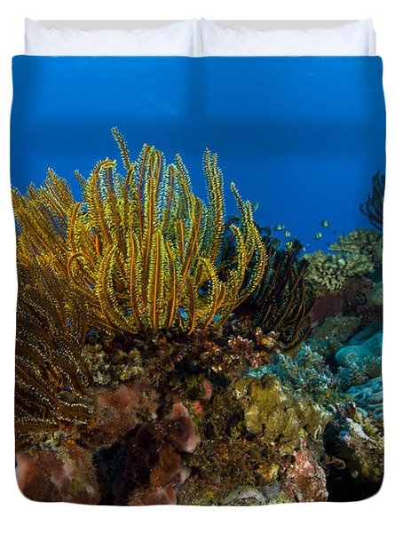 Colony Of Crinoids, Papua New Guinea Duvet Cover by Steve Jones