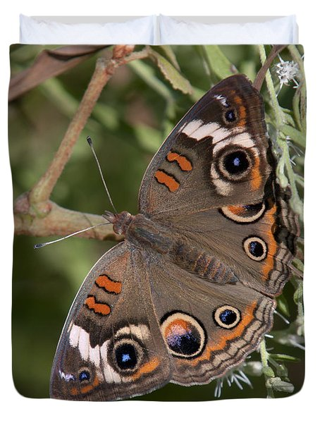 Common Buckeye Butterfly Din182 Duvet Cover by Gerry Gantt