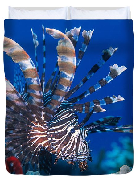 Common Lionfish Duvet Cover by Franco Banfi and Photo Researchers