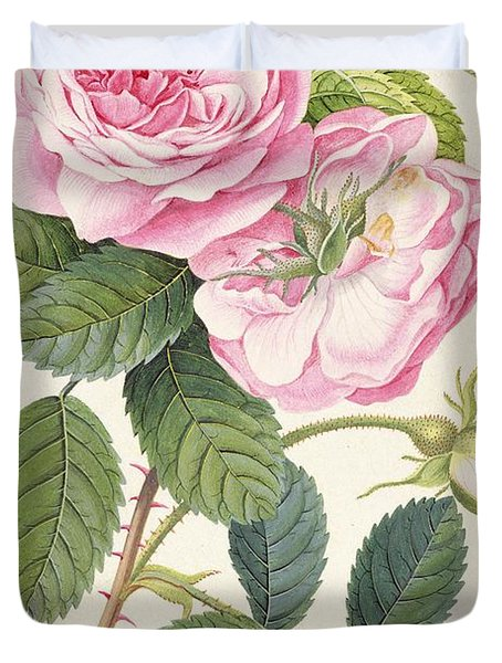 Common Provence Rose Duvet Cover by Georg Dionysius Ehret
