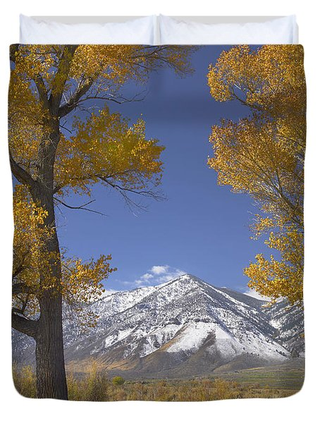 Cottonwood Trees Fall Foliage Carson Duvet Cover by Tim Fitzharris