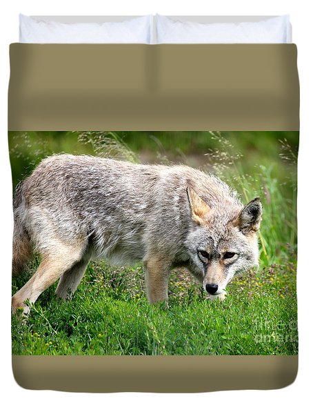 Duvet Cover featuring the photograph Coyote On The Prowl by Kathy  White