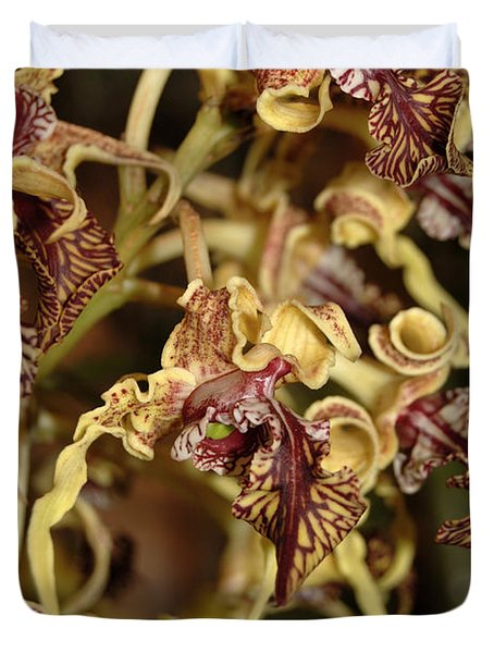 Duvet Cover featuring the photograph Crazy Curly Orchid by Eva Kaufman