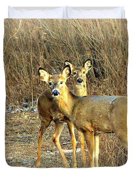 Deer Duo Duvet Cover by Marty Koch