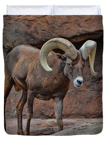 Desert Bighorn Sheep Ram I Duvet Cover
