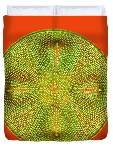 Diatom Aulacodiscus Formosus Duvet Cover