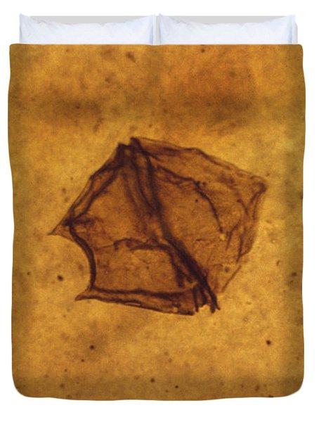 Dinoflagellate Fossil Duvet Cover by Eric V. Grave