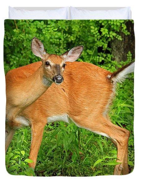 Doe A Deer Duvet Cover by Karol Livote