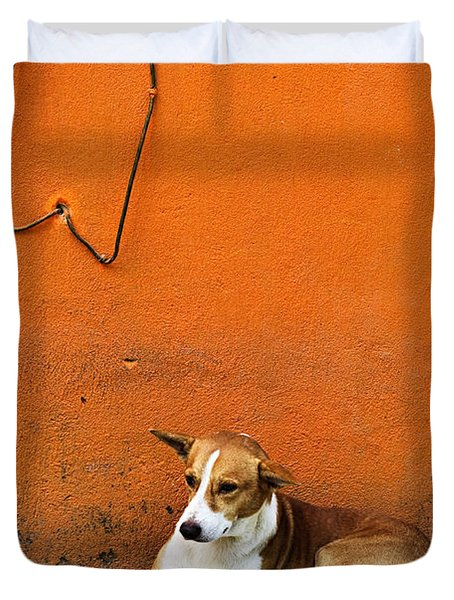 Dog Near Colorful Wall In Mexican Village Duvet Cover by Elena Elisseeva