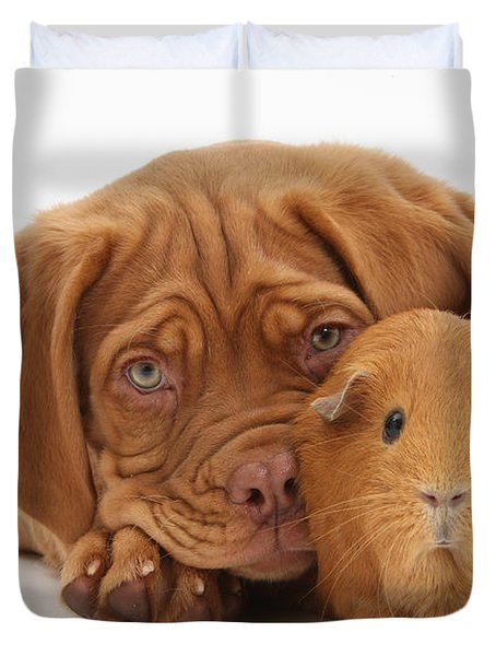 Dogue De Bordeaux Puppy With Red Guinea Duvet Cover by Mark Taylor