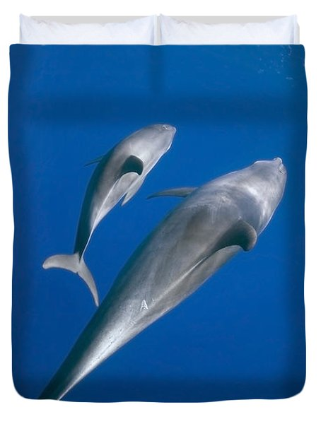 Dolphin And A  Cub Duvet Cover by Tom Peled