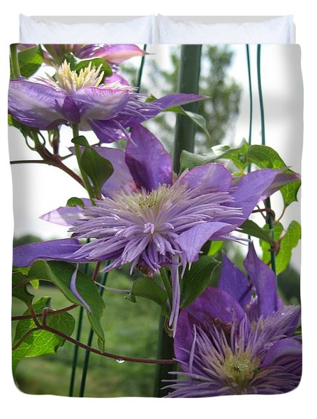 Duvet Cover featuring the photograph Double Clematis Named Crystal Fountain by J McCombie