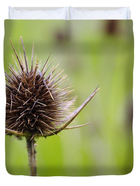 Dried Thistle Duvet Cover by Carlos Caetano