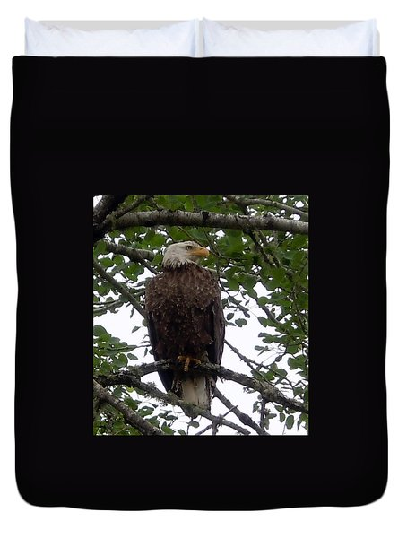 Duvet Cover featuring the photograph Eagle At Hog Bay Maine by Francine Frank