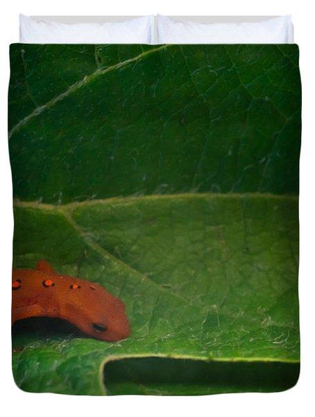 Easterm Newt Nnotophthalmus Viridescens 17 Duvet Cover by Douglas Barnett