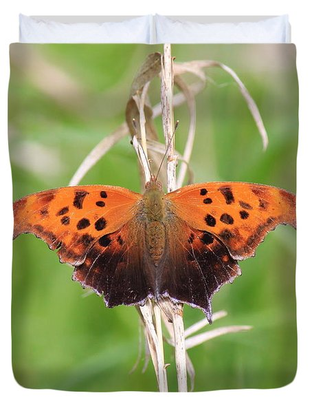 Duvet Cover featuring the photograph Eastern Comma Butterfly by Penny Meyers