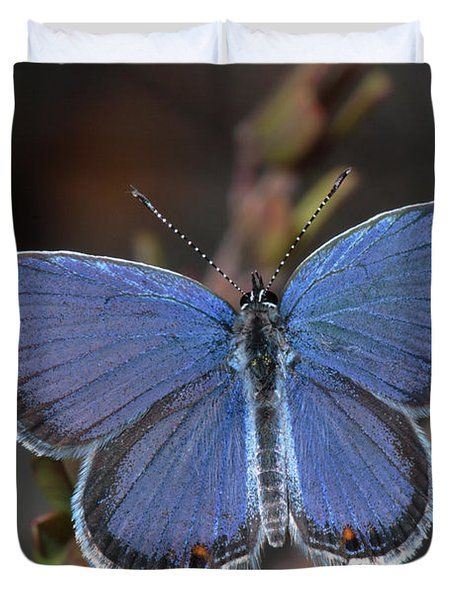 Eastern Tailed Blue Butterfly Duvet Cover