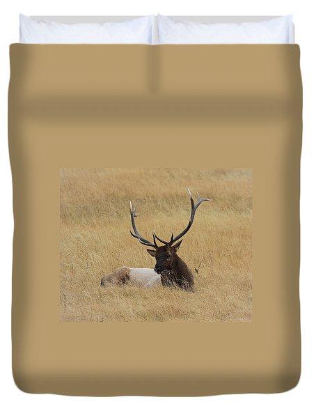 Elk In The Meadow Duvet Cover by Steve McKinzie
