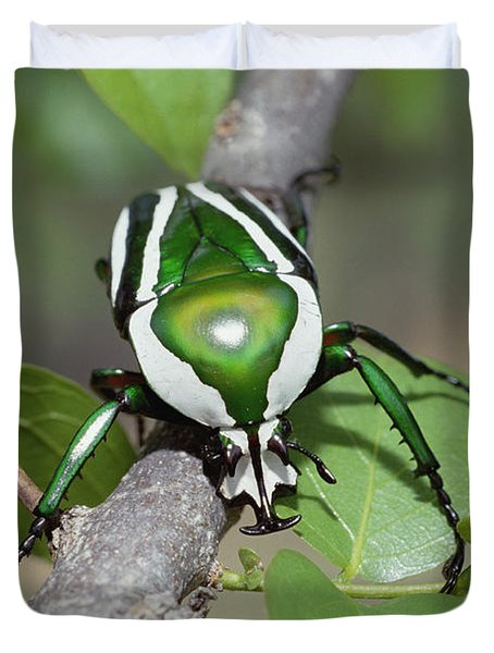 Emerald Fruit Chafer Beetle Duvet Cover by Gerry Ellis