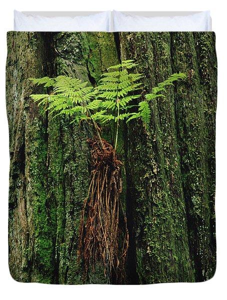 Epiphytic Fern Growing On Redwood Duvet Cover by Gerry Ellis