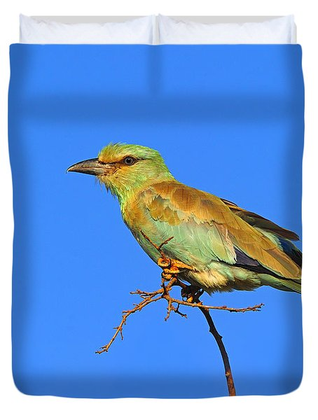 Eurasian Roller Duvet Cover by Tony Beck