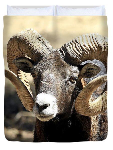 European Big Horn - Mouflon Ram Duvet Cover by Teresa Zieba