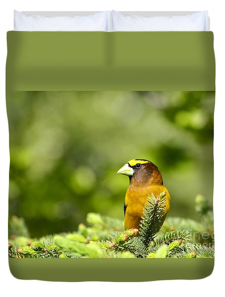 Evening Grosbeak Duvet Cover