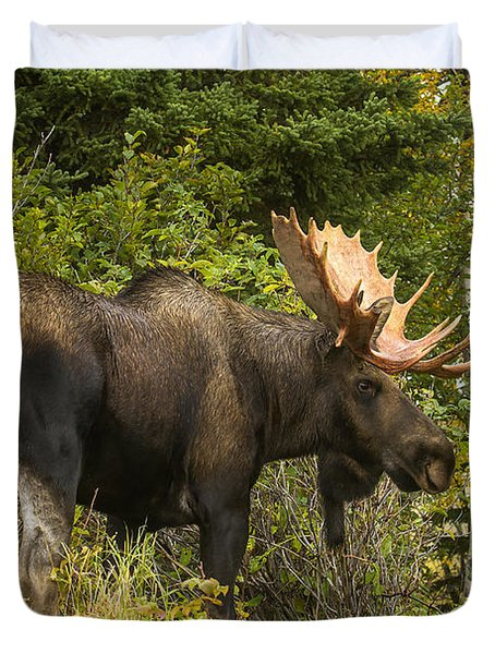 Duvet Cover featuring the photograph Fall Bull Moose by Doug Lloyd