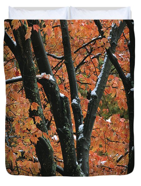 Fall Foliage Of Maple Trees After An Duvet Cover by Tim Laman