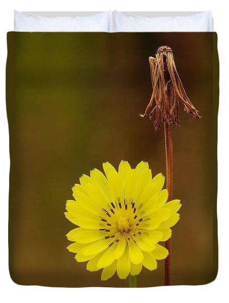 False Dandelion Flower With Wilted Fruit Duvet Cover