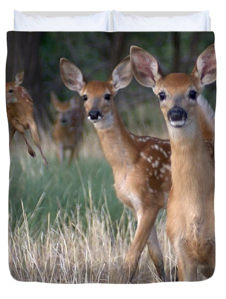 Fawns Fawns Duvet Cover by Bill Stephens