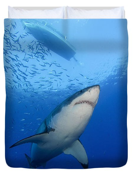 Female Great White, Guadalupe Island Duvet Cover by Todd Winner