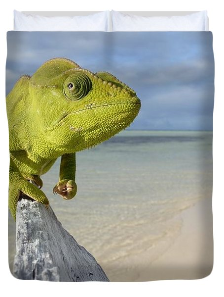 Female Oustalet's Chameleon Duvet Cover by Alex Rosenfield and Photo Researchers