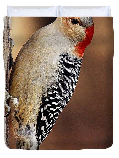 Female Red-bellied Woodpecker 5 Duvet Cover by Larry Ricker