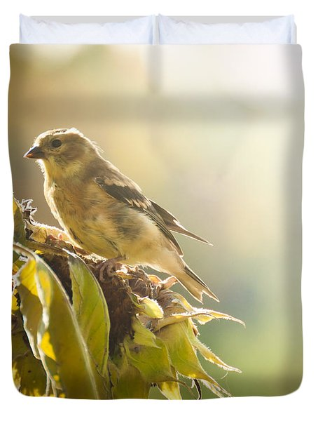 Finch Aglow Duvet Cover by Cheryl Baxter